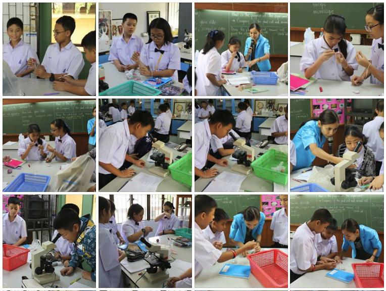การทดลองเรื่องเซลล์ม1GEP